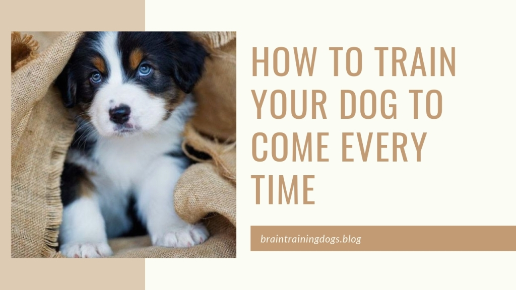 How To Train Your Dog To Come When Called Every Time