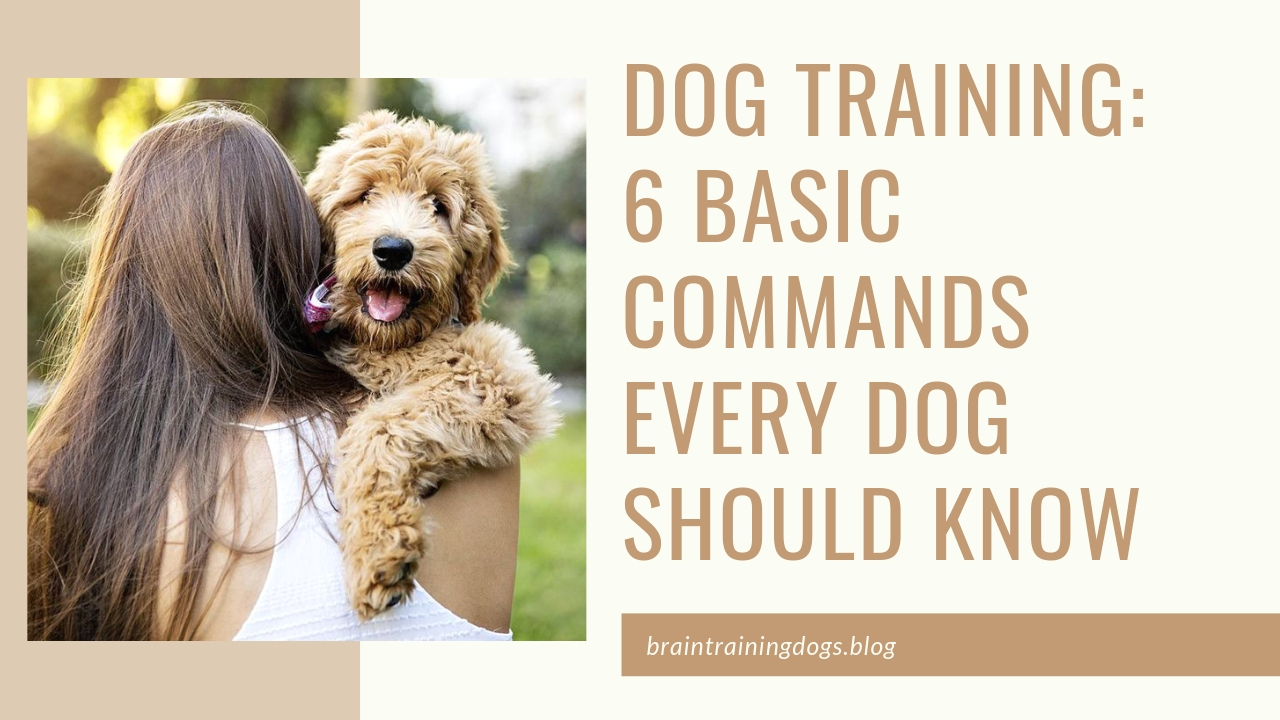 Dog Training: 6 Basic Commands Every Dog Should Know