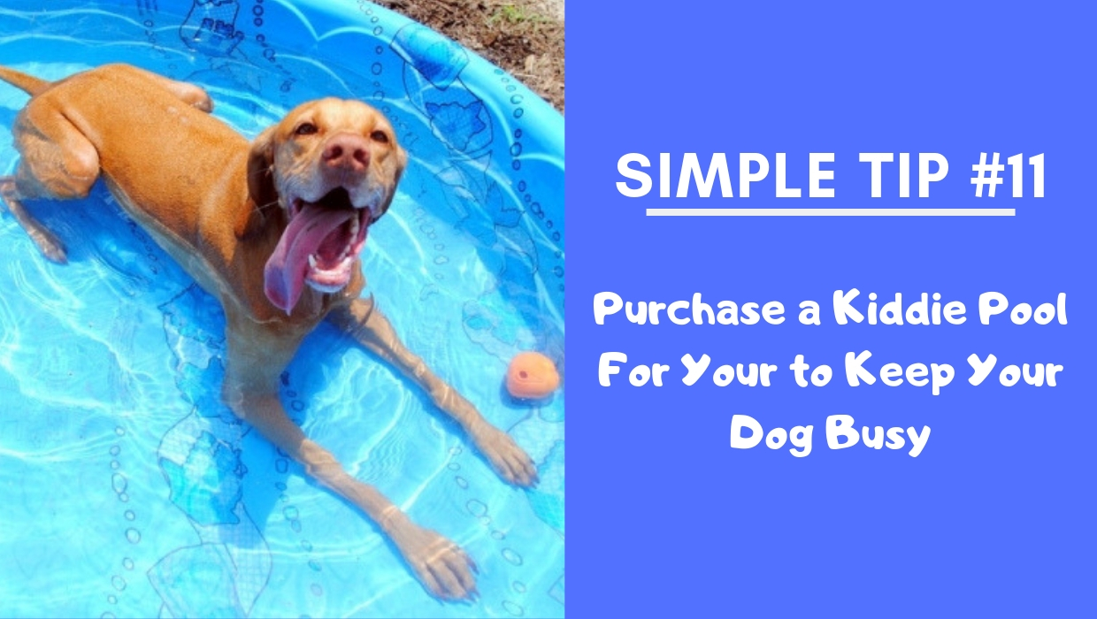 Purchase a Kiddie Pool For Your to Keep Your Dog Busy