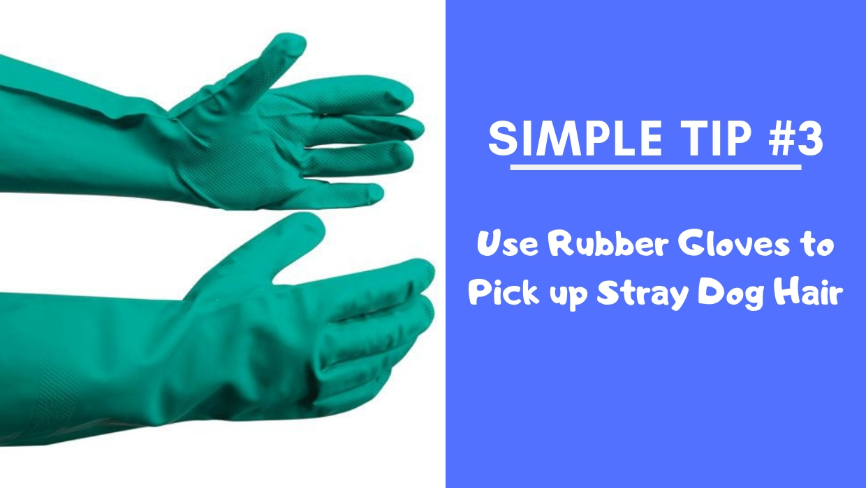 Use Rubber Gloves to Pick up Stray Dog Hair